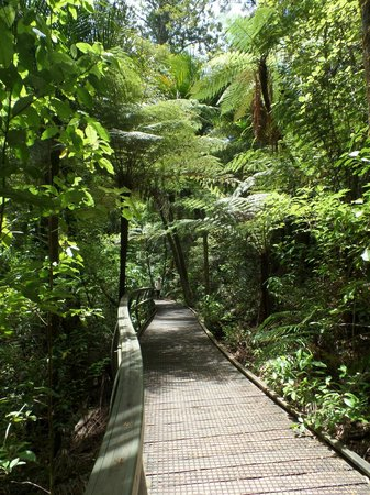 Russell Mini Tours - Day Tours: Elevated walkway Kauri Forest