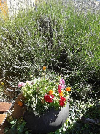 Marcopolo Inn: Lavanda y flores.