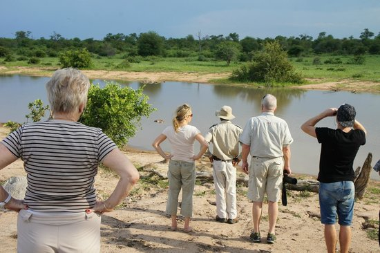 Umlani Bushcamp: Stretching our legs at a waterhole.