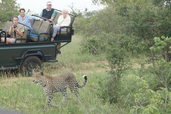 Umlani Bushcamp: We had company viewing the leopard!