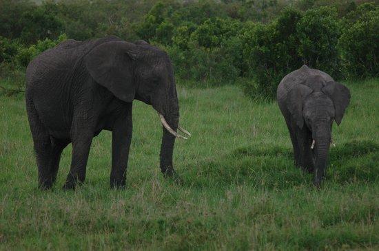 Oloi Karere Mara Camp: Incontri ravvicinati