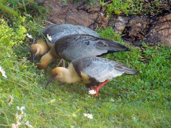 Bellevue Bed & Breakfast : Aves en los jardines