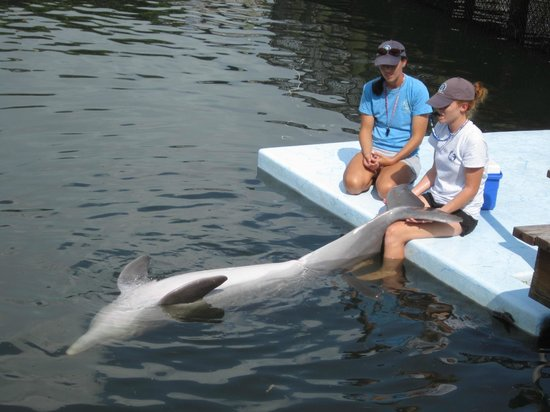 """Dolphin Research Center: """"Roll over for Mommy"""""""