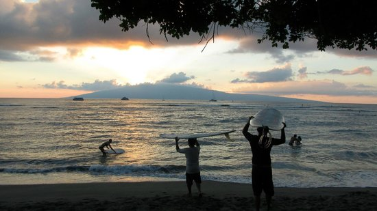 The Tiki Hale: Surfers using the beach