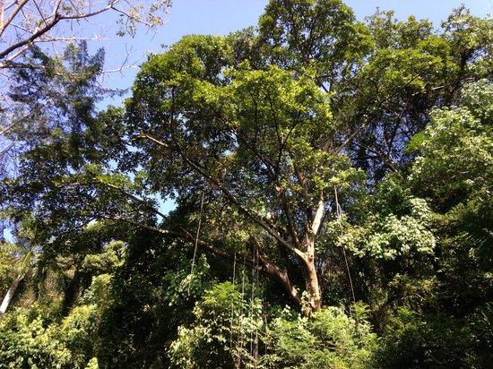 Cerro Ancón: Arboles en al ruta