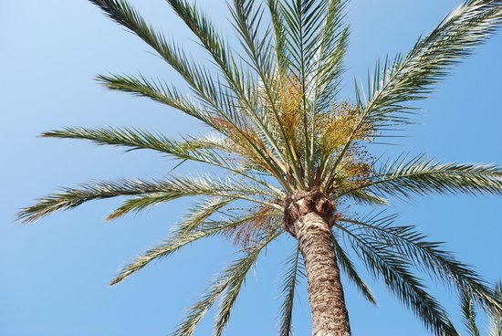 Apartamentos Les Dunes Suites : prachtige  bomen