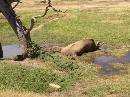 Werribee Open Range Zoo: Leroy the male Rhino