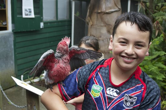 The Parrot Place : My son with his favorite bird, a super friendly hand-reared Galah