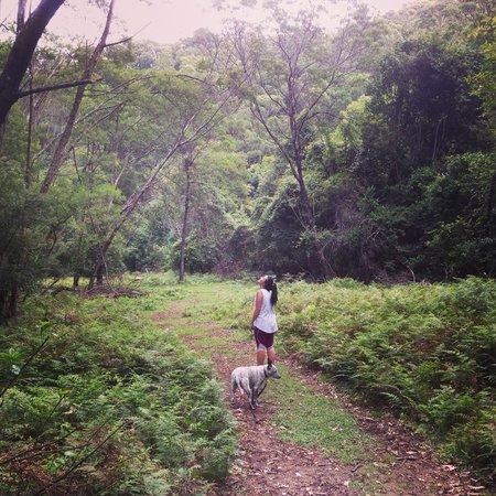 Sinclairs Country Retreat: bush track