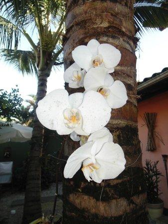 Pousada Portal das Artes: Orquídeas do Jardim