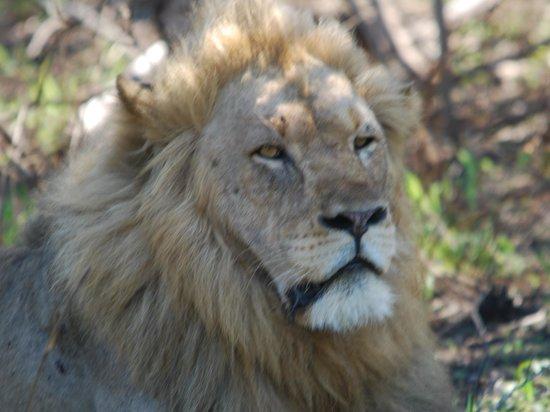 Leopard Mountain Game Lodge: le roi