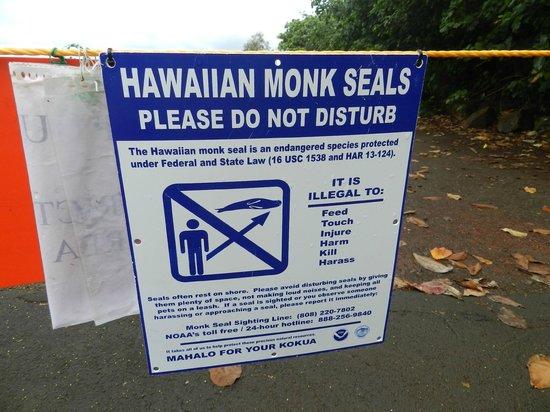 Keokea Beach Park: Monk Seals Are A Protected Species