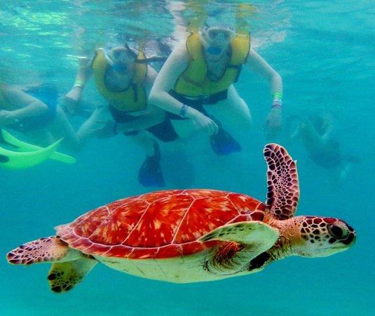 Plage d'Akumal: us and turtle