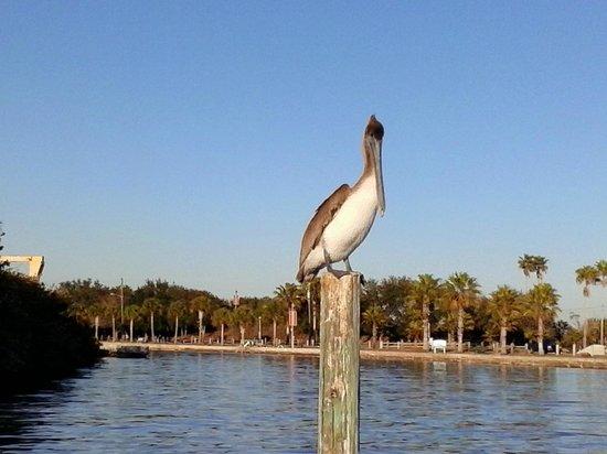 Kayak Nature Adventures : Marina guardian, Gulfport Marina.