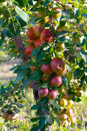 Bayfield Apple Co.
