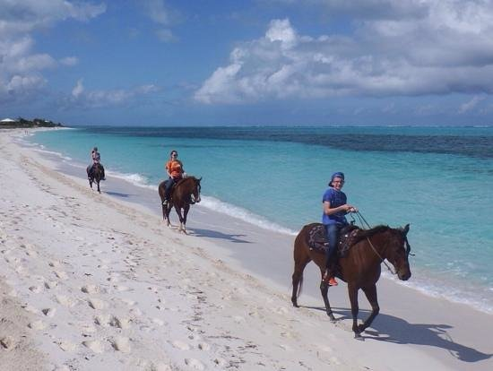 Aquamarine Beach Houses: Horses for rent within walk of ABH