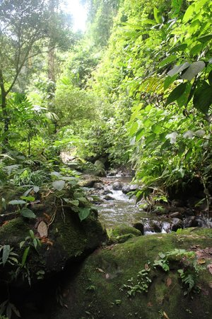 Princesa de la Luna Eco Lodge: The creek bed near the waterfall on the property