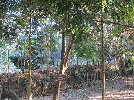 Infinity Resort Kaziranga : Another view of the grounds