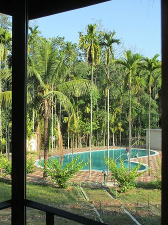 Infinity Resort Kaziranga: The tree collection around the pool - a view from the room
