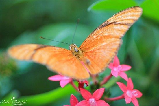 Monteverde Butterfly Garden (Jardin de Mariposas): Julia