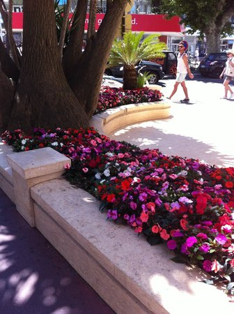 Palais des Festivals et des Congrès de Cannes : beautiful flower bed nearby