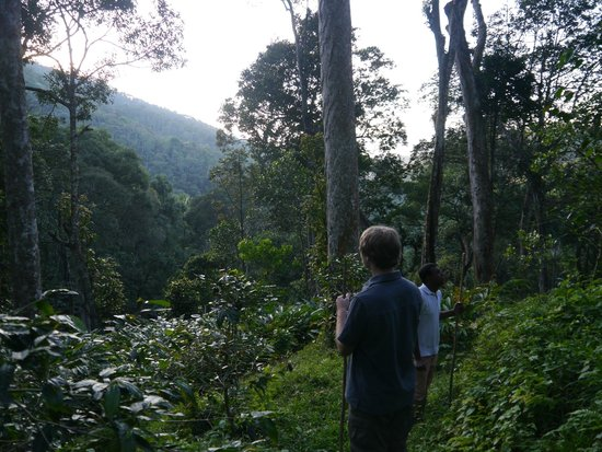 Niraamaya Retreats Cardamom Club - Thekkady: Jungle jaunt through premises