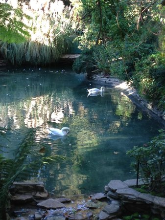 Hotel Bel-Air: Swan pond