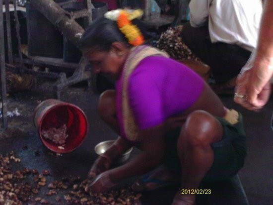 Day Tripper Tours & Travel - Day Tours: Cashew sorting - Cashew factory
