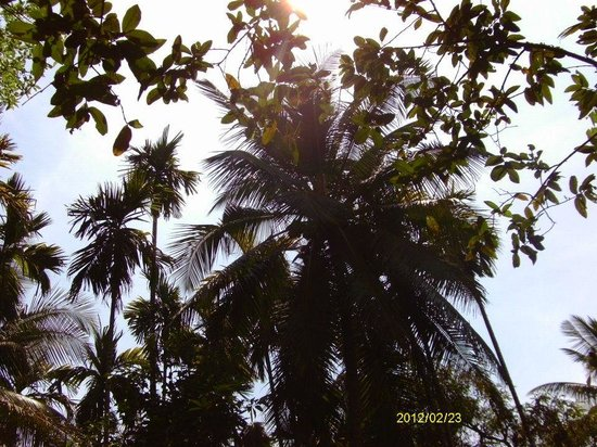 Day Tripper Tours & Travel - Day Tours: Banana Palm at Sahakari Spice plantation