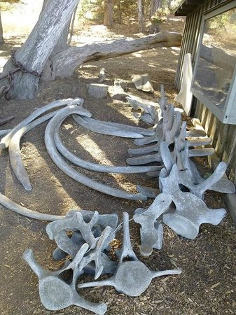 Point Lobos State Reserve : Whale bones