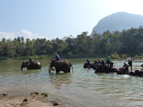 All Lao Elephant Camp: Bathtime