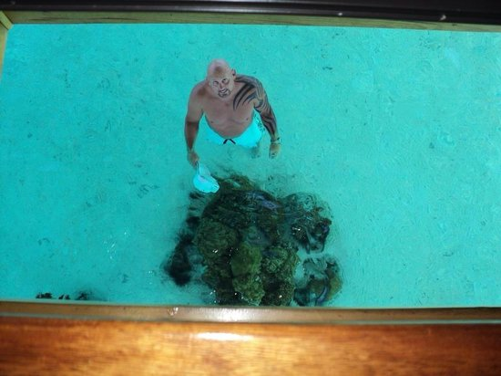 Image Result For Bora Bora Resorts With Glass Floors