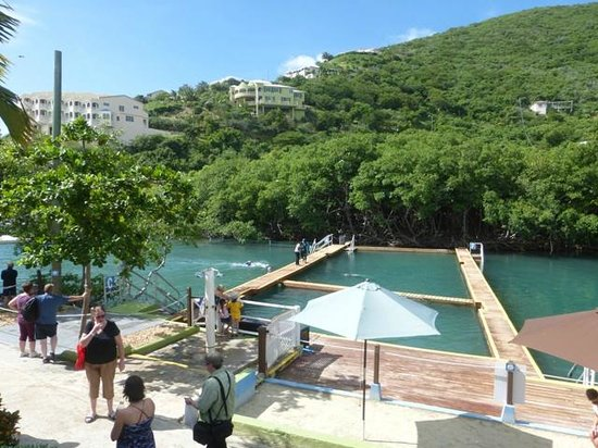 Dolphin Discovery Tortola: .....