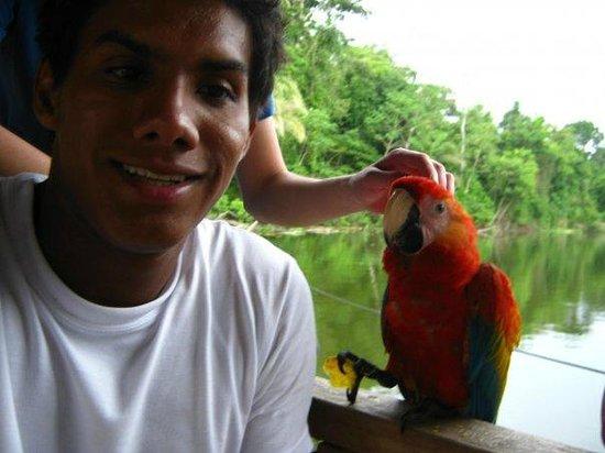 Amazon King Lodge: Guacamaya