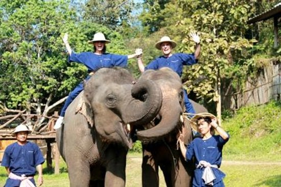 Elephant Life Experience: Thrill of a lifetime!