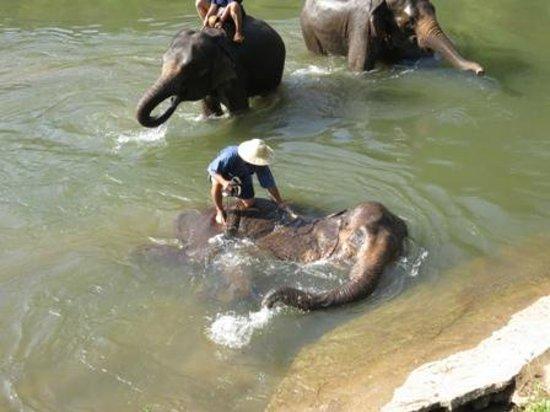Elephant Life Experience: Elephants enjoying the water!