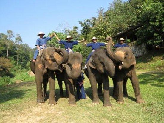 Elephant Life Experience: Polo anyone?