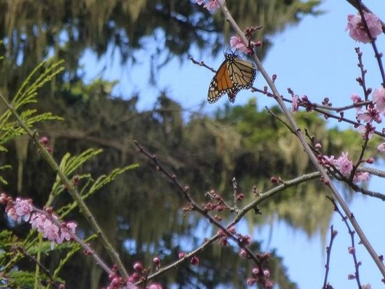 Monarch Grove Sanctuary: Butterfly