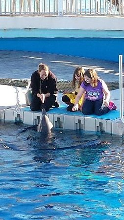 Gulfarium Marine Adventure Park: Private encounter with dolphins