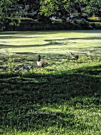 The Struble Trail: Ducks