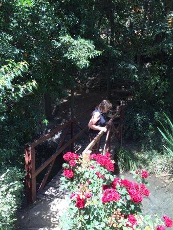 Cabanas Pinotea : Creek