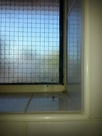 Banksia Tourist Park: ladies bathroom window