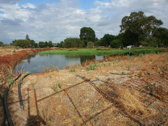 Banksia Tourist Park : Dam/sewage system