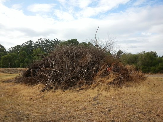 Banksia Tourist Park : Accident waiting to happen