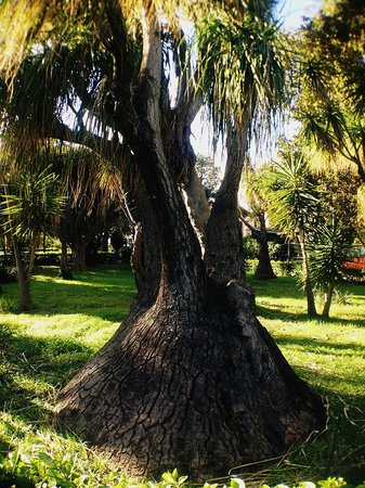 Orto Botanico di Palermo : .