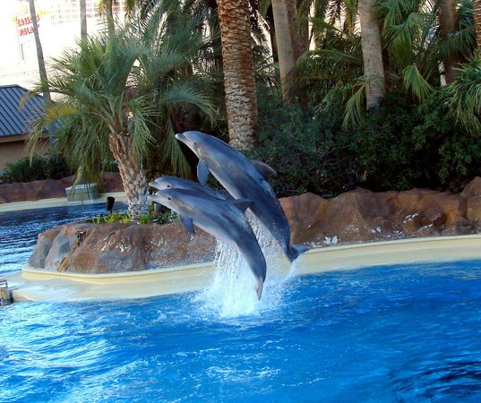 Secret Garden Picture Of Siegfried Roy 39 S Secret Garden And Dolphin Habitat Las Vegas
