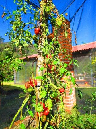 Villa Azalea - Luxury B&B: Organic greenhouse garden