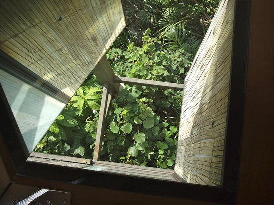 Bangkok Tree House: The floor at the top of the staircase!