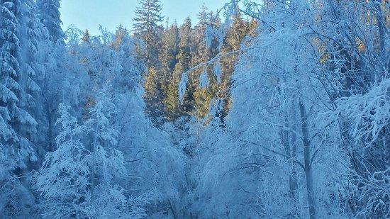 Hotel Restaurant Mures: Зима Лето