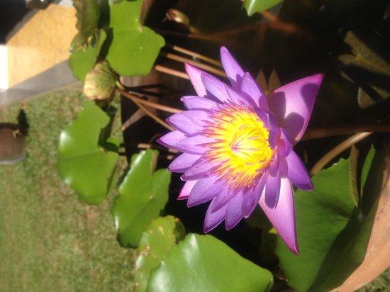Mahawewa Nature Resort: Flowers near the hotel